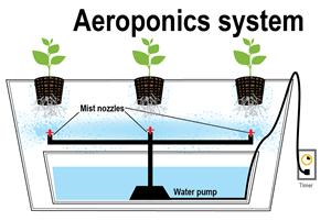 aeroponia1
