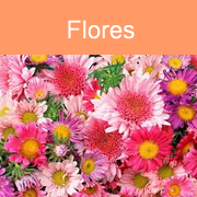 bot-flores
